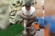 Anakonda yılanı adamı az daha boğuyordu!