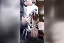 Yaralı martıyı liseliler kurtardı