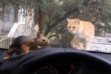 Arabada sincap gören kedi