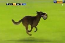 Lig maçında sahaya köpek girdi