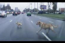 Yola fırlayan yavru köpek yürekleri burktu