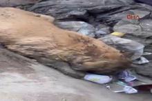 Çuval içinde çöpe atılan köpeği temizlik görevlileri fark etti