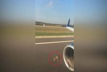 Kalkış anında inanılmaz olay: Motora kuş girdi!