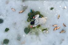 Buz üstünde tehlikeli sazan avı
