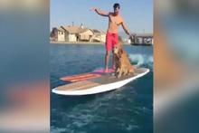 Sevimli köpeğin sörf keyfi