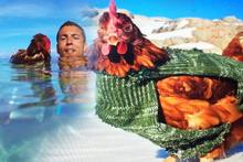 Bu tavuk sıradan değil sörf yapıyor dünyayı geziyor