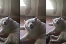 Kafası kaşınan köpeğin mutluluğu