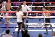 Boks maçında taraftar boksöre yumruk salladı