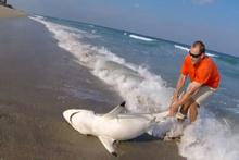 Köpek balığı kurtarma operasyonu kameraya yansıdı