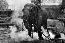 Elektrik verilerek idam edilen fil Topsy