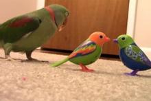 Arkadaş sevmeyen sevimli papağan