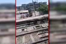 Tren inekleri böyle ezdi geçti