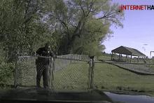 Teksas polisinin başı bu sefer boğa yüzünden dertte