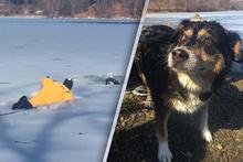 Donmak üzere olan köpeği son anda kurtardı