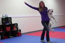 Sevimli köpekten muhteşem dans performansı!