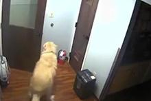 Zeki köpek hastaneden böyle kaçtı