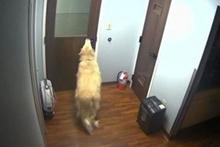 Hastaneden ustalıkla kaçan köpek
