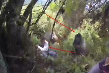 Goril insanlara saldırdı!