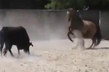 At ve boğa karşı karşıya gelirse!