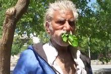 Ağaç yiyerek yaşayan Pakistanlı