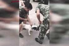 Köpek yılanı böyle yakaladı