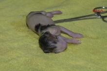 Yavru kedi, ezilen annesinin karnından sağ çıkarıldı