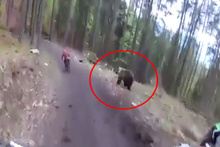 Bisiklet yarışı sırasında sporcuyu ayı kovaladı