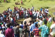 Ölen filin cenaze törenine onlarca kişi katıldı