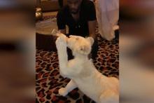 Ünlü futbolcu Patrice Evra, evinde aslan besledi