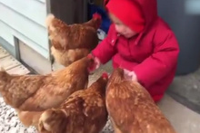 Tavukları beslediği sırada olan oldu