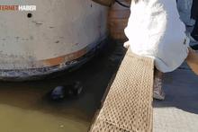 Deniz Aslanı küçük kızı kaçırdı! Dehşete düşüren o anlar