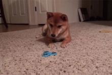 Stres çarkının strese soktuğu köpek
