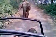 Öfkeli fil safaricileri kovaladı!