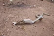 Pet şişe yutan kobra böyle görüntülendi