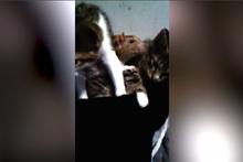 Fare ile kedilerin dostluğu görenleri şaşırtıyor
