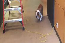 Elektrik kablolarından korkan köpek güldürüyor