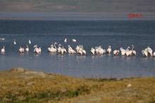 Erçek Gölü'de flamingoların görsel şöleni başlıyor