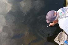 Eliyle balık tutan adam
