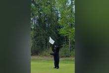 ABD'de ayı golf sahasına indi