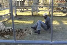 Çita görevlilere saldırdı