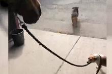 Atı ahırdan çıkaran küçük köpek