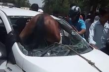 Hindistan'da arabanın ön camından at girdi