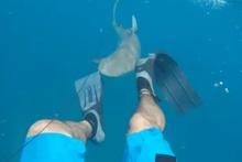 Köpek balığı balıkçılara saldırdı