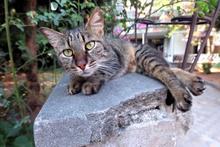 Kedi filmi fragmanı - Sinemalarda bu hafta