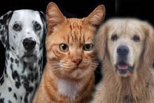 Vesikalık çektiren kediler ve köpekler