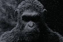 Maymunlar Cehennemi: Savaş filmi fragmanı - Sinemalarda bu hafta