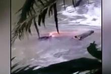 Öldürdüğü adamı geri getirirken görüntülenen timsah tartışma yarattı
