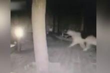 Bodrum'da depremden 4 dakika önce çekilen görüntüler şok etti