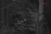 Yavru ayı, annesinden ağaca tırmanmasını öğrenirken görüntülendi