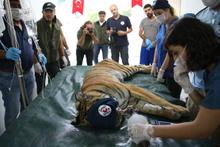 Halep'ten getirilen hayvanların tedavisine başlandı